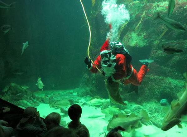Der Nikolaus taucht ab: Bescherung für die Fische im Multimar Wattforum