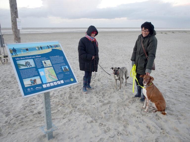 Freilaufende Hunde im Nationalpark Wattenmeer machen Sorgen – Hunde an die Leine
